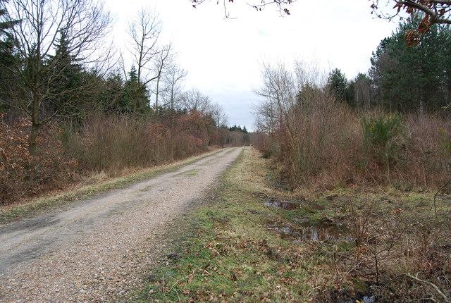 Track through Clowes Wood
