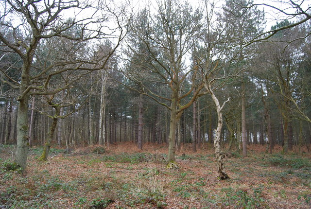 Mixed woodland, Clowes Wood