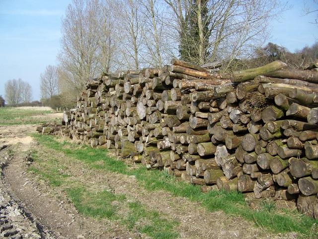 Timber piles near Blackbush Plantation