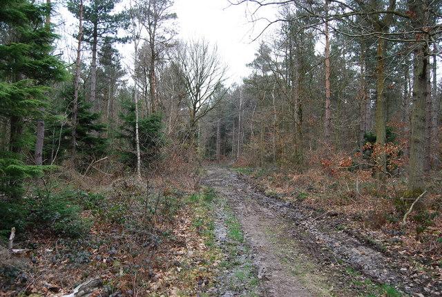 Muddy footpath through Clowes Wood (2)