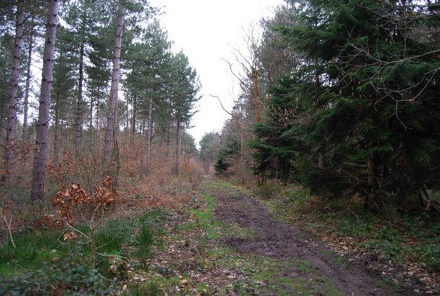 Path through Clowes Wood