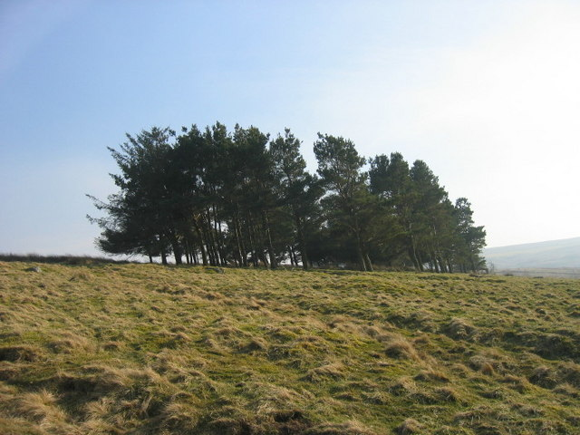Copse above West Ruffside