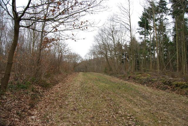 Track, Clowes Wood