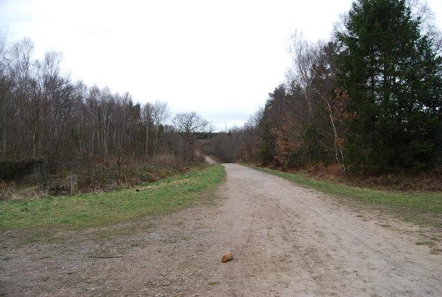 Track & Footpath, Clowes Wood