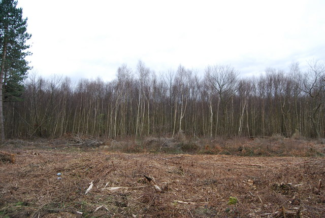 Felled forest, Clowes Wood