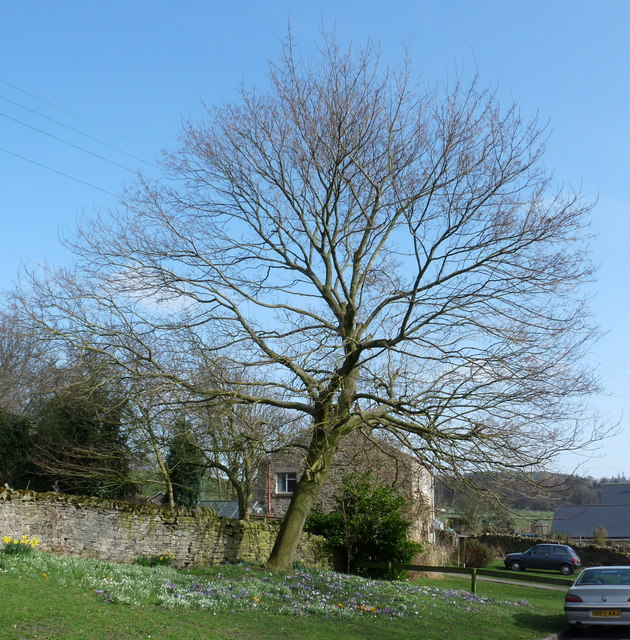 Spring day in Thornley Village, County Durham