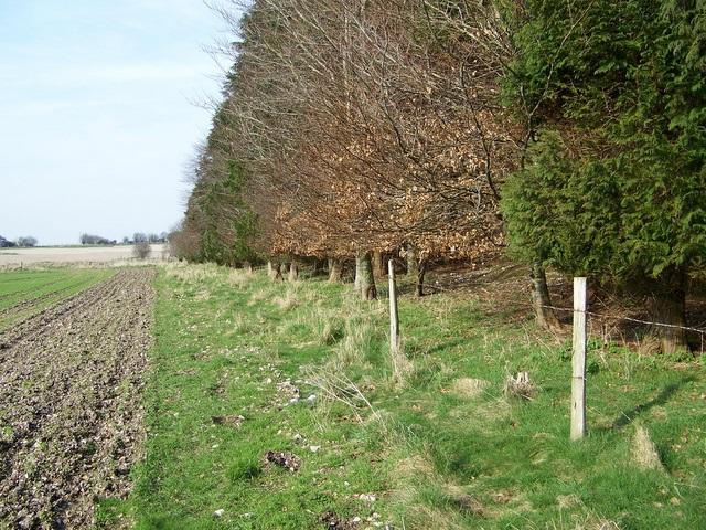 Footpath, Salisbury Plantation