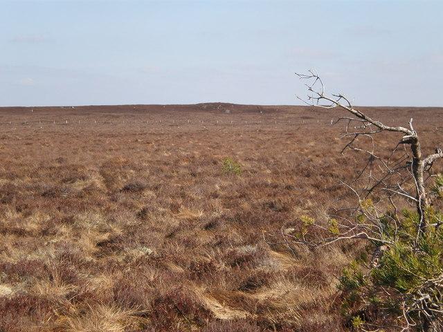 Fence crossing moorland near 320 top