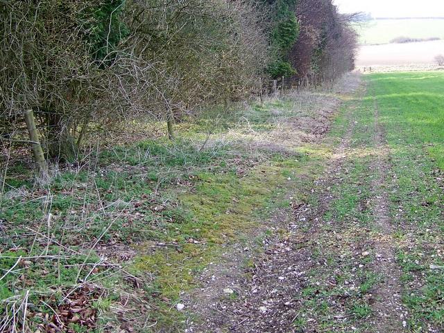 Bridleway, Salisbury Plantation