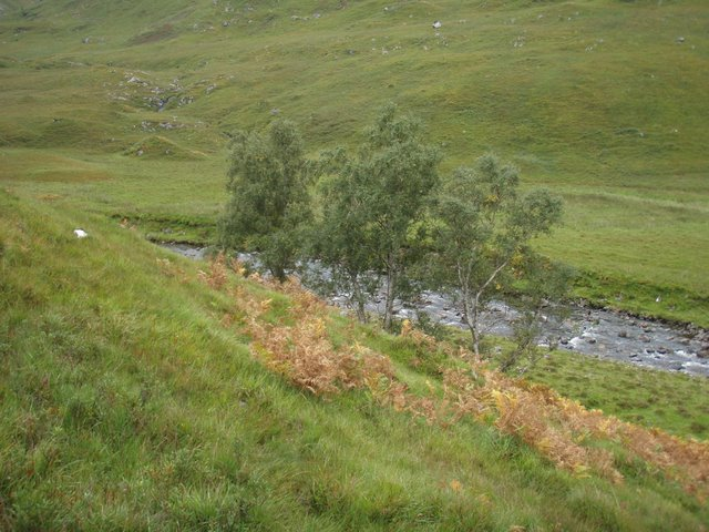 Stand of birch above the Allt a' Ghlomaich