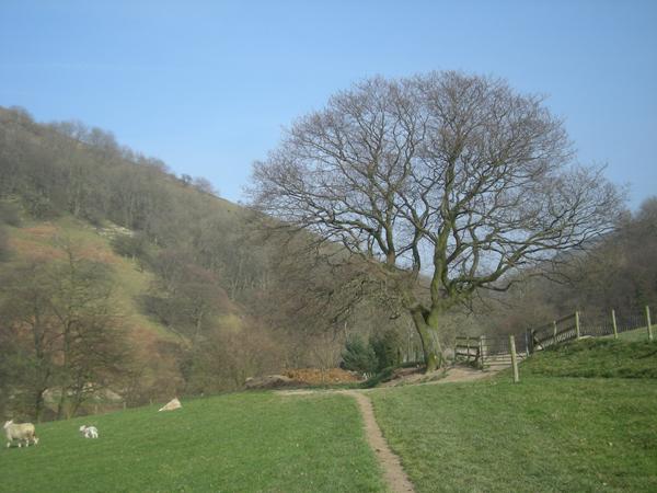 Path between Helmeth Hill & Caer Caradoc