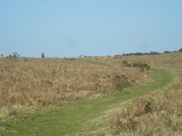 Strolling across the hillside
