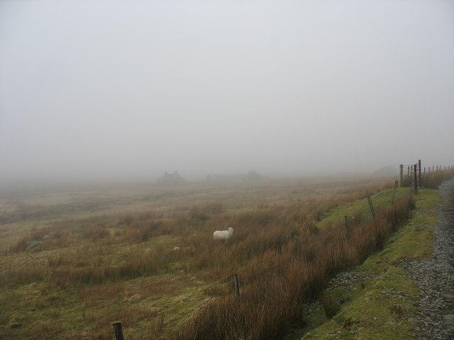 Rough grazing above Hafodty Newydd farmhouse
