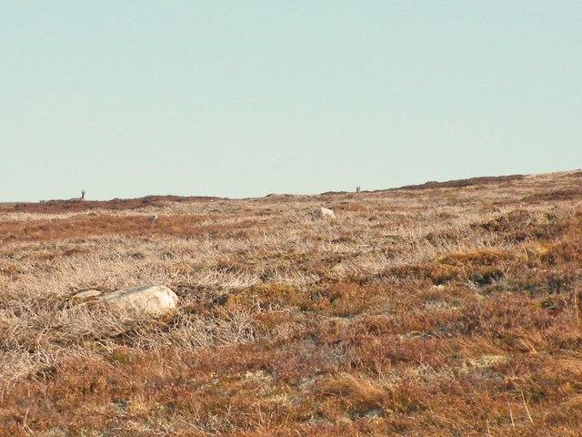 Deer on Carn Bad nan Clachan  moorland
