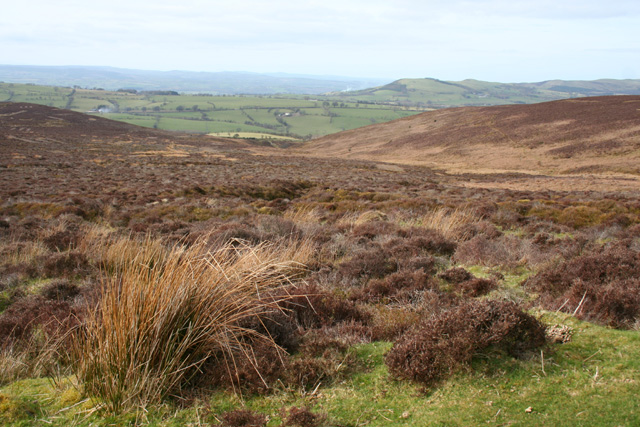 Moorland on the western slopes of Cyrn-y-Brain