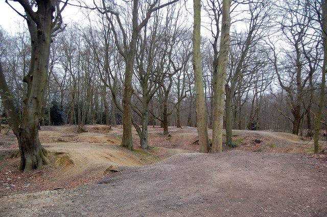 Woodland at Warley Gap