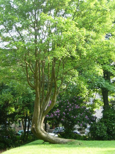 Huntly Gardens in summer