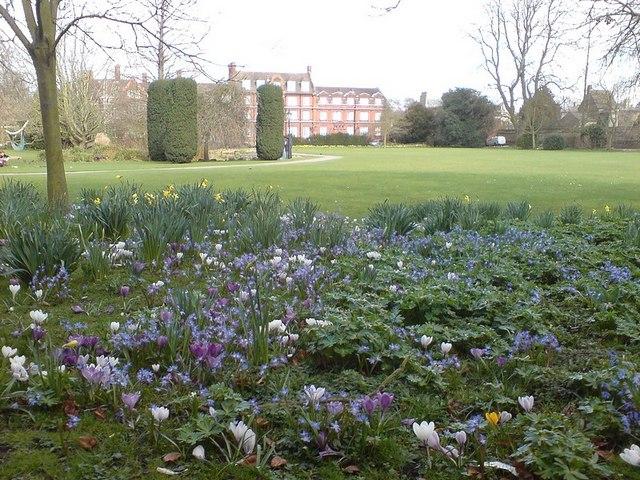 Spring flowers in the Paddock, Emmanuel College