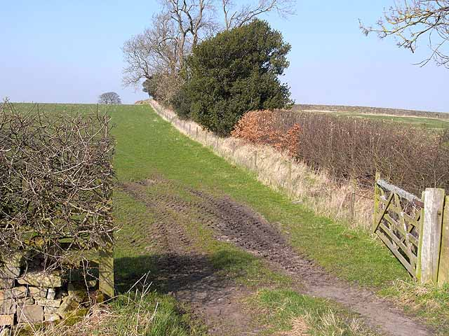 Field boundary near Carr Hill Farm