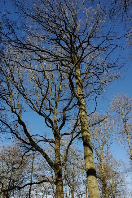Trees in Allum Grove
