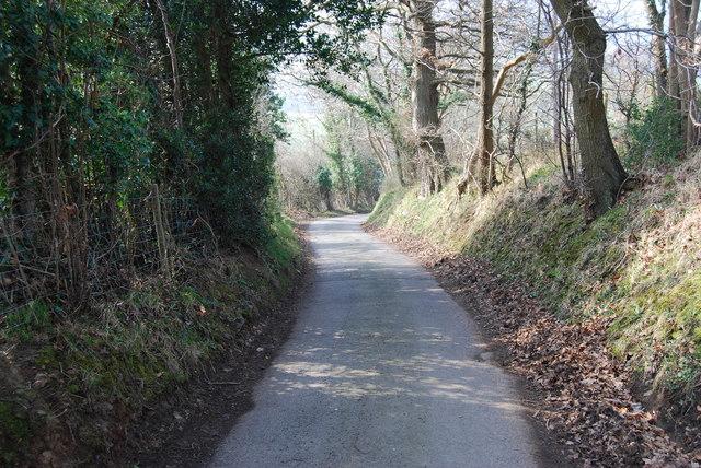 Sunken lane with big trees