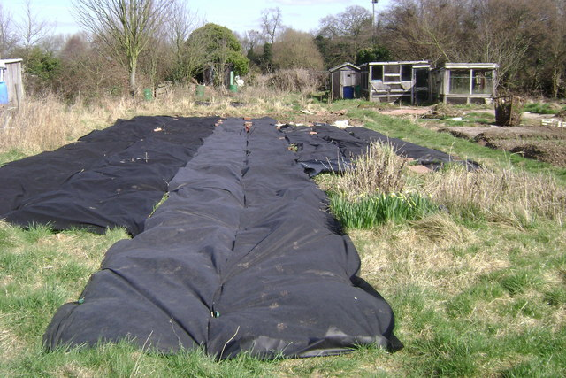 Suppressing weeds, Potterton's allotments, Warwick