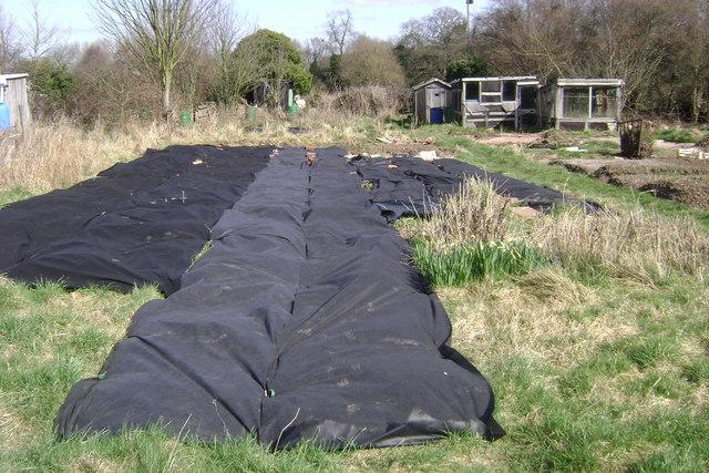 Suppressing weeds, Potterton's allotments, Warwick