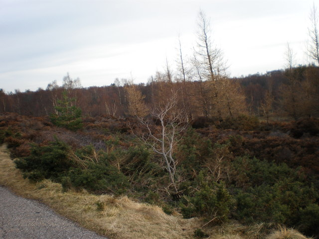 Dulsie Wood from Old Military Road