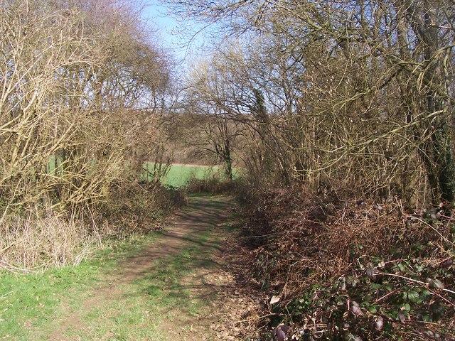 Greensand Way goes through Hale Park Wood