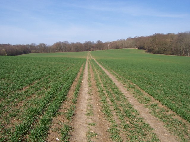 Greensand Way heads to Moat Wood