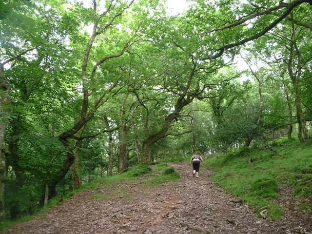 Dunkery Hill : Footpath