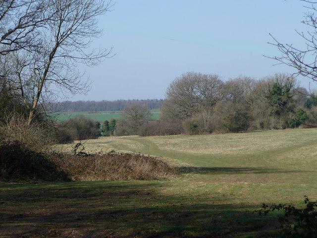 Bramdean Common