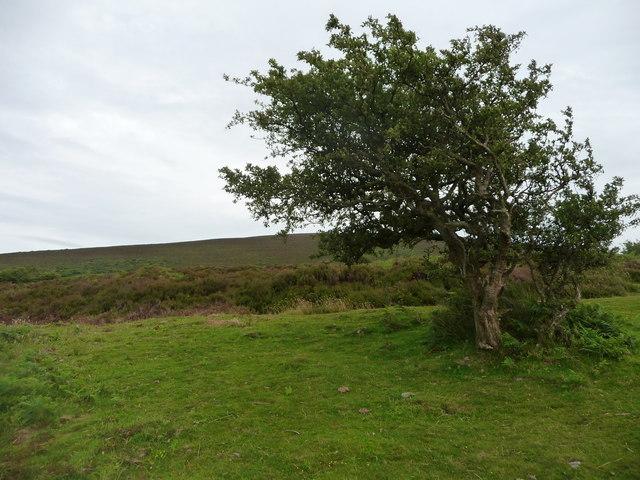 Exmoor : Dunkery Hill
