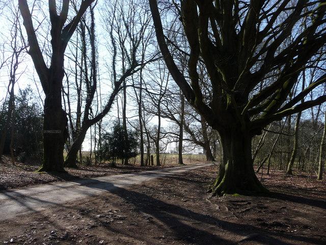 Track to Wood Farm, Bramdean