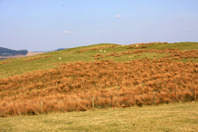 Broomhillbank Hill