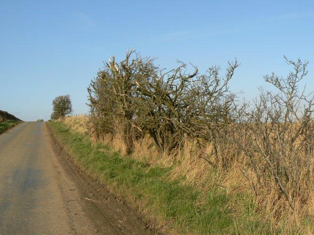 Hacked-back hedging