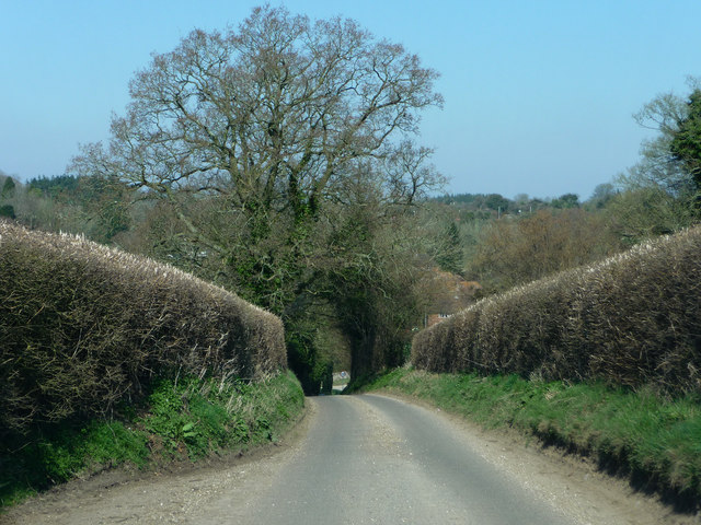 Bighton Lane