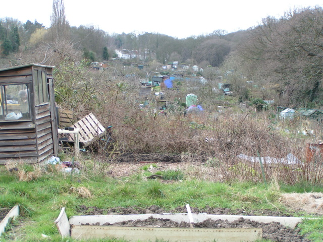 Crouch End allotments