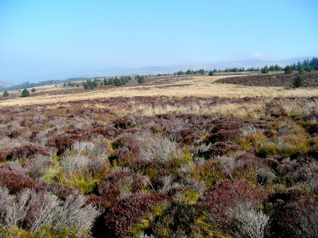 Heather and grass moorland