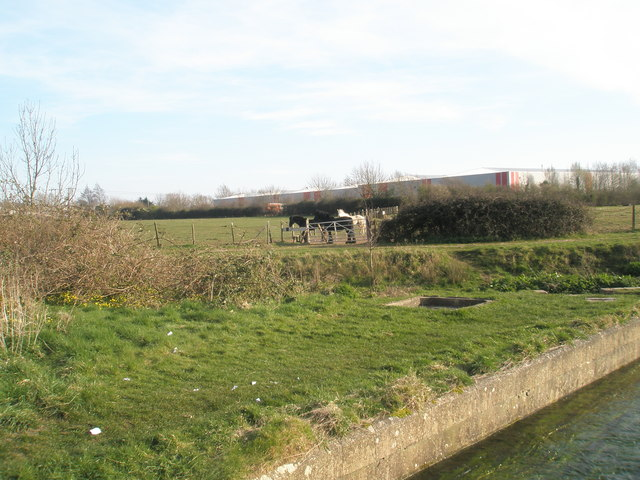 Horses in the springtime at Bedhampton