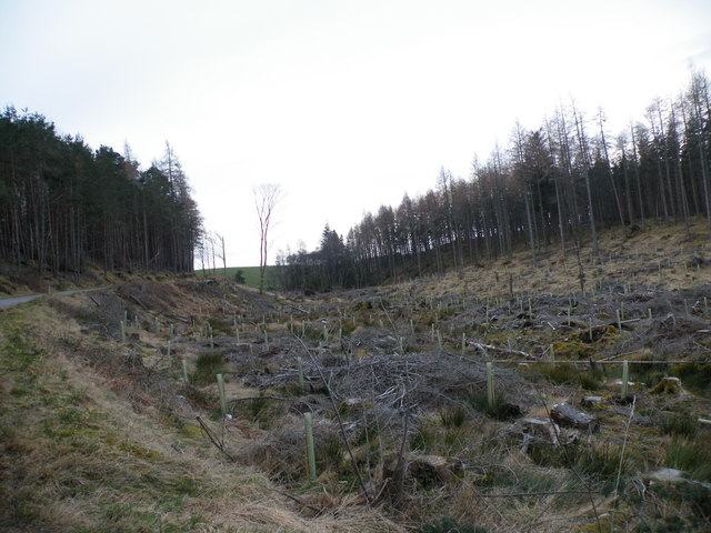 Replanting Trees after forestry clear fell