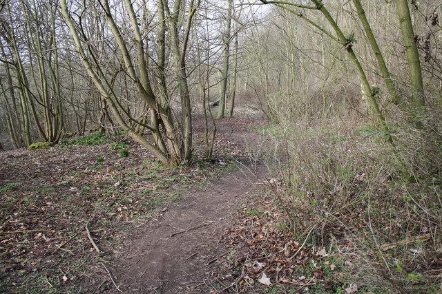 Path Through Danes Dyke Heading North