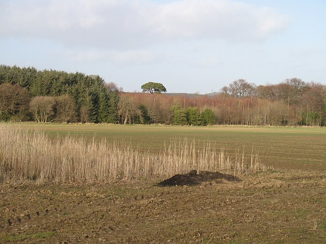 Game crops and Lamblair Woods