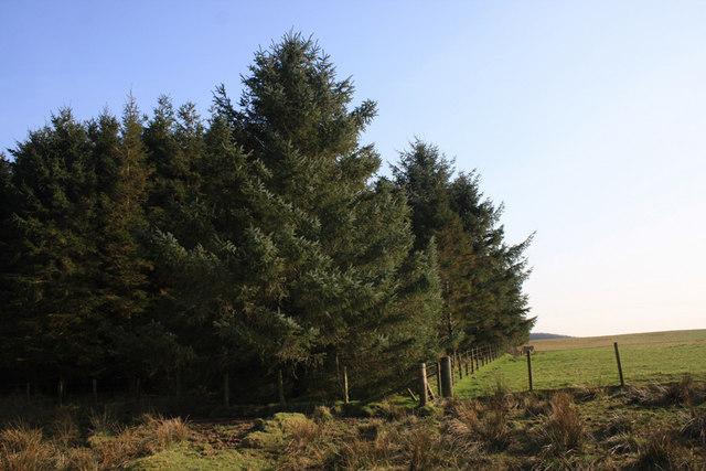 Plantation edge