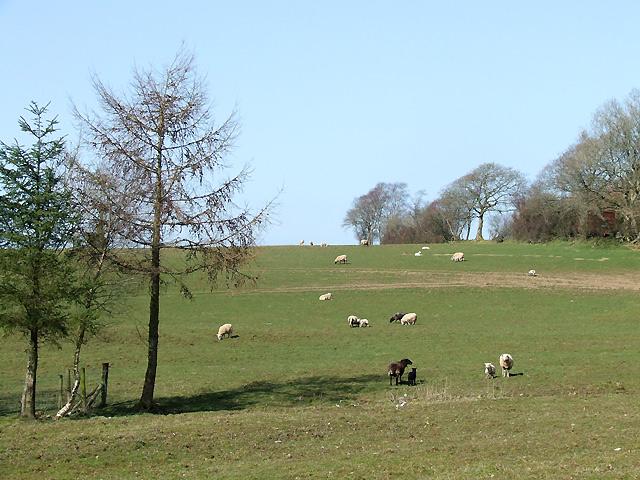 Pastureland south-east of Llwyn-y-Groes, Ceredigion