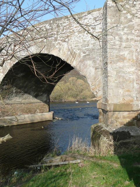 Swans below Forteviot Bridge