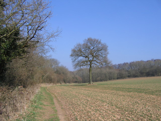 Monarch's Way Path Approaching Twiland Wood