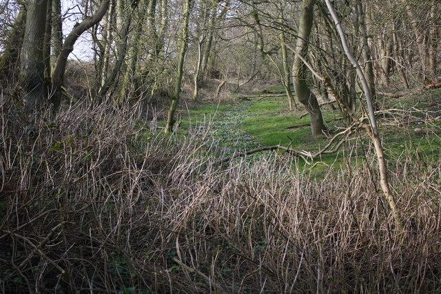 Danes Dyke Near the B1229
