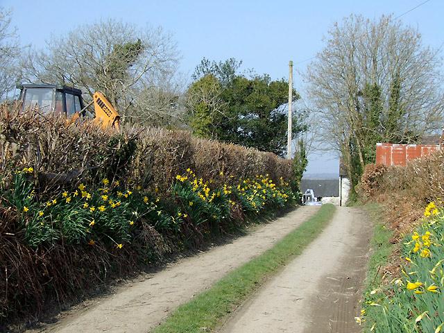 Bridleway near Cockshead, Ceredigion