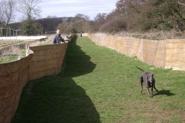 Warwick Dog Track: the chase